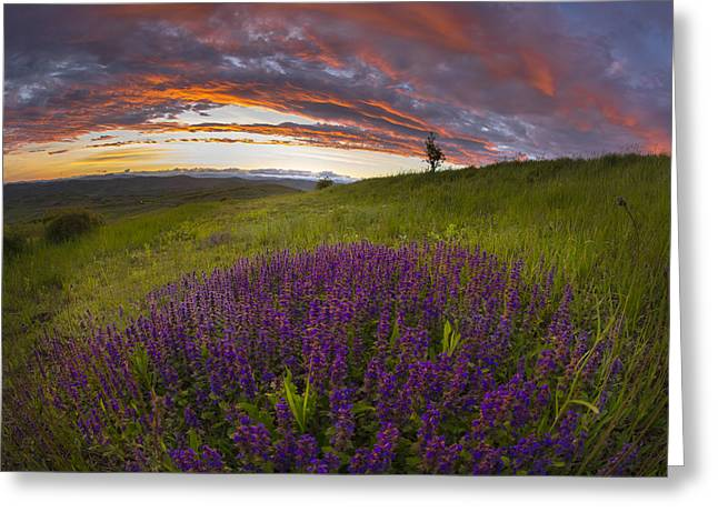 Sunset With Lavender Greeting Card by Ovidiu Caragea