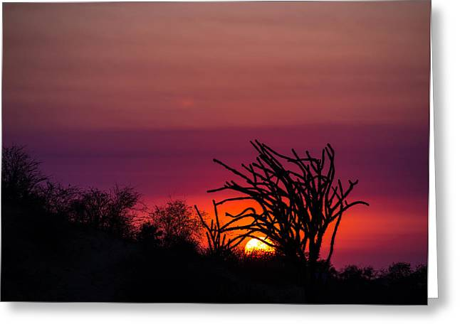 Sunset With Octopus Tree Greeting Card by Alex Lapidus