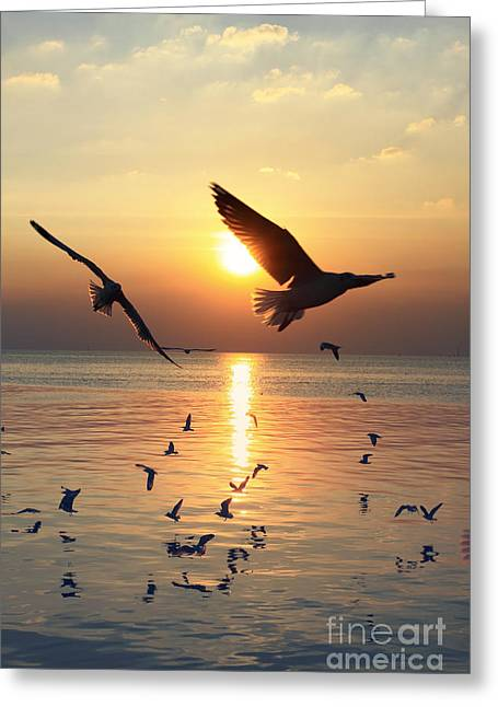 Sunset With Seagull Greeting Card