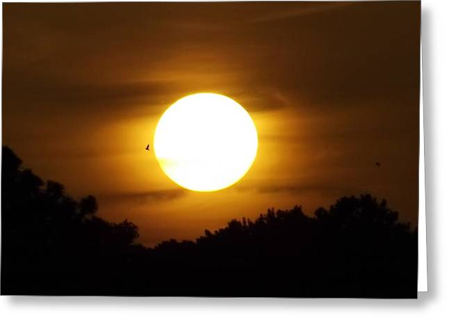Sunset With Soaring Birds Greeting Card by Keegan Hall