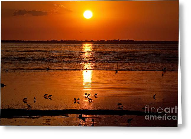 Greeting Card featuring the photograph Sunset With The Birds Photo by Meg Rousher