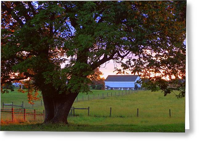 Greeting Card featuring the photograph Sunset With Tree by Joseph Skompski