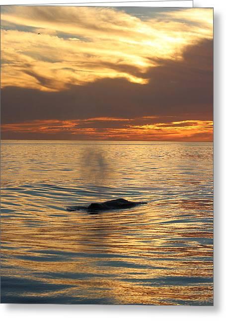 Sunset Wonder Greeting Card