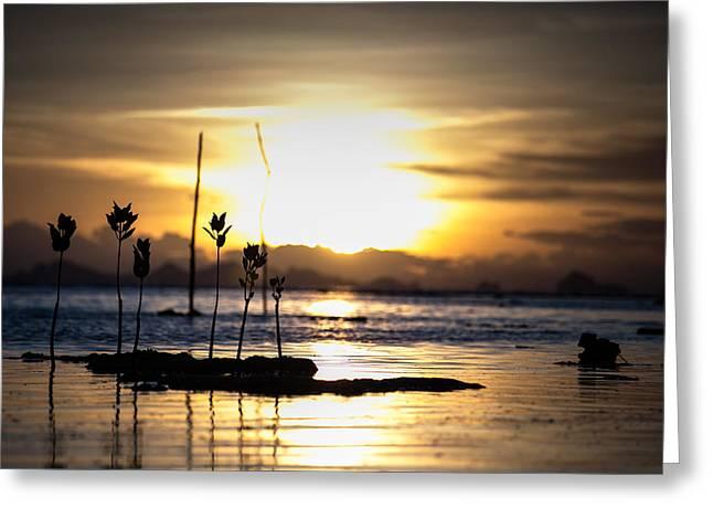 Sunset Greeting Card by Zestgolf