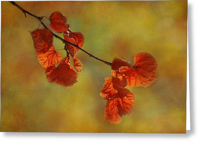 Sunshine And Red  Greeting Card by Ivelina G