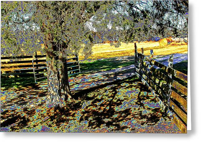 Greeting Card featuring the photograph Sunshine Down On The Farm by Diane Miller
