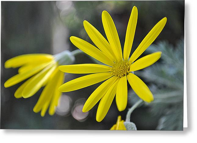 Sunshine In A Flower Greeting Card