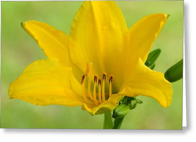 Sunshine In A Flower Greeting Card by Kim Pate