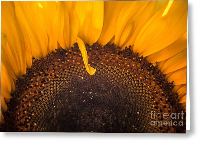 Greeting Card featuring the photograph Sunshine by Jan Bickerton