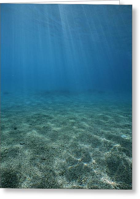 Sunshine On Dolphin Reef Greeting Card