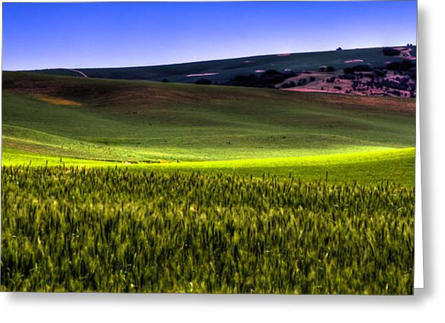 Sunshine On The Palouse Greeting Card by David Patterson