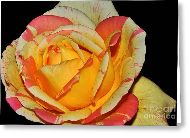 Sunshine Rose Greeting Card by Kaye Menner
