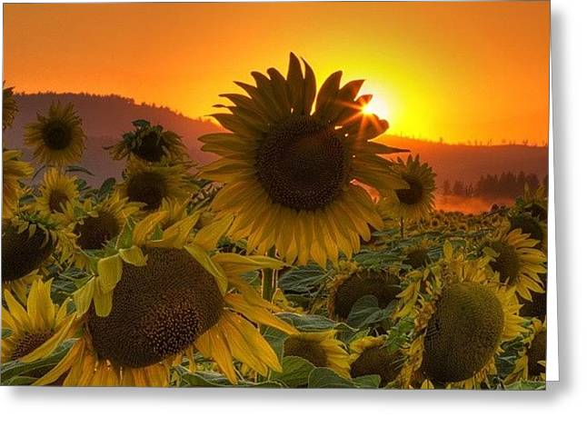 Sunst And Sunfloers  #sunset Greeting Card by Mark Kiver