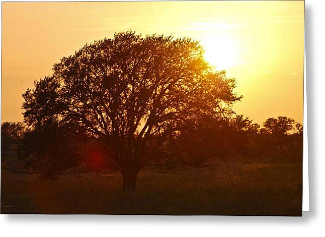 Suntree Greeting Card by Teresa Dixon