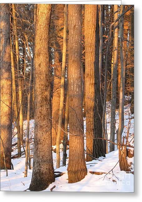 Greeting Card featuring the photograph Sunwarmed In Winter by Melissa Stoudt