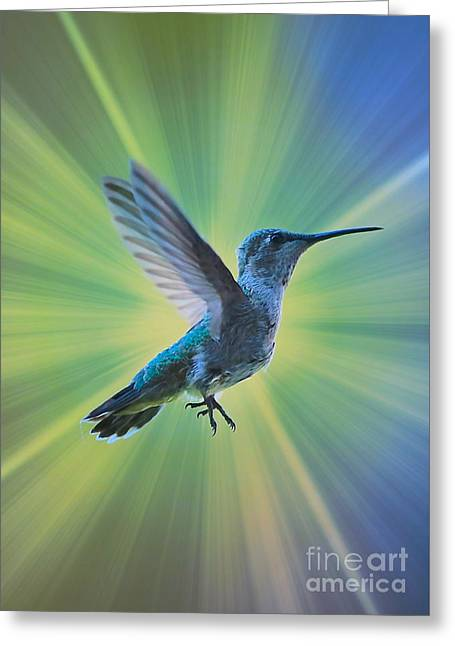 Super Hummingbird Greeting Card by Carol Groenen