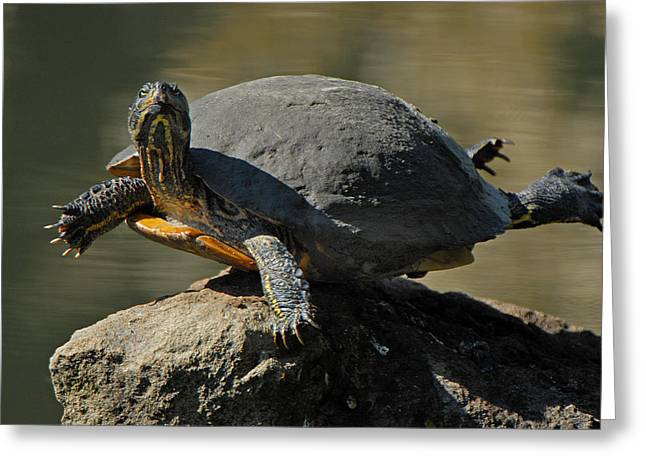 Super Turtle Greeting Card by David Marr