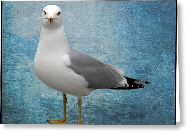 Greeting Card featuring the photograph Superior Seagull by Terri Harper