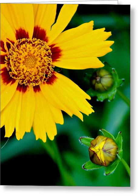 Supreme Beauty Greeting Card by Frozen in Time Fine Art Photography