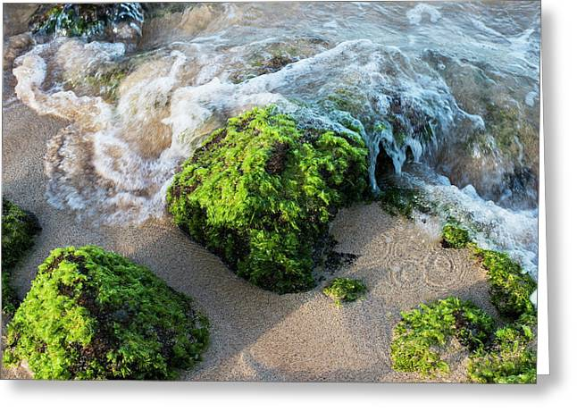 Surf Breaks On The Shore On Moss Greeting Card by Robert L. Potts