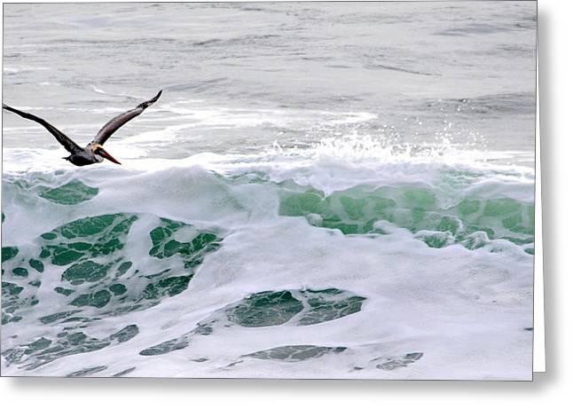 Surf N Pelican Greeting Card