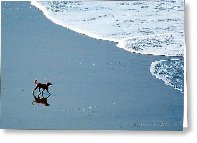 Surfer Dog Greeting Card