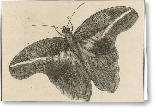 Surinamese Giant Butterfly Xix, Jan Luyken Greeting Card