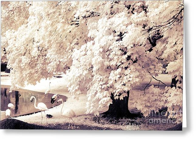 Surreal Infrared Ethereal Nature With White Flamingos - Infrared Trees And Flamingos  Greeting Card by Kathy Fornal