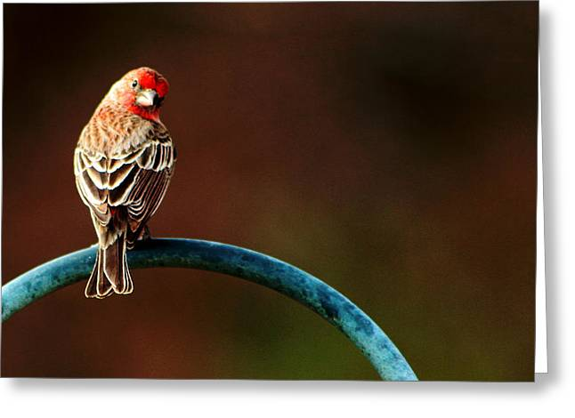 Surreal Purple Finch Greeting Card