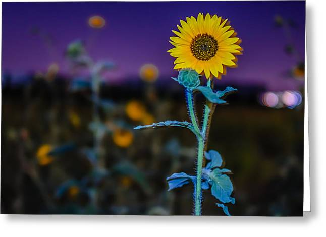 Surreal Summer Sunflower Sprout Greeting Card