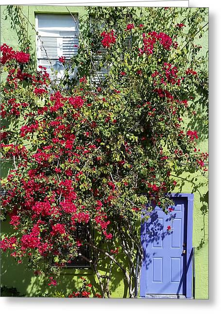 Surrounded By Bougainvillea Greeting Card by Liane Wright