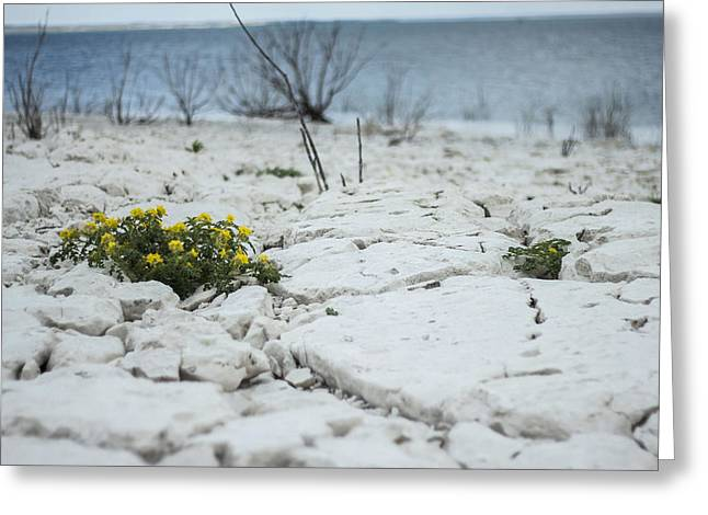 Greeting Card featuring the photograph Survival by Amber Kresge