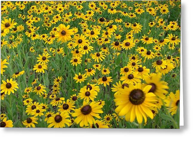 Susans In The Wind Greeting Card