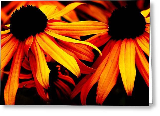 Susans On Fire Greeting Card