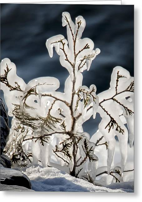 Suspended In Ice Greeting Card
