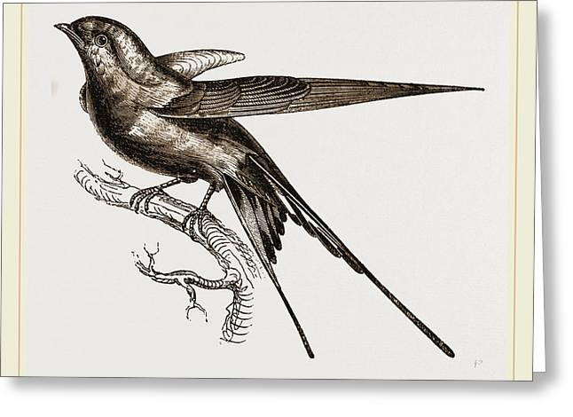 Swallow Of Palestine Greeting Card by Litz Collection