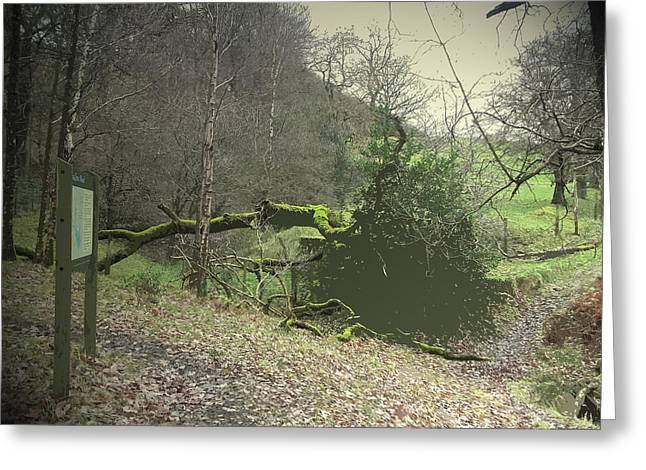 Swallows Wood, Nature Reserve Situated On The Site Greeting Card by Litz Collection