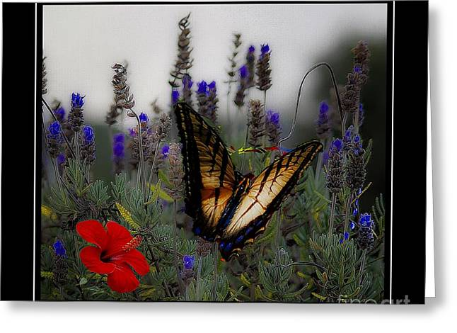 Swallowtail Among Blue Flowers Greeting Card by John  Kolenberg