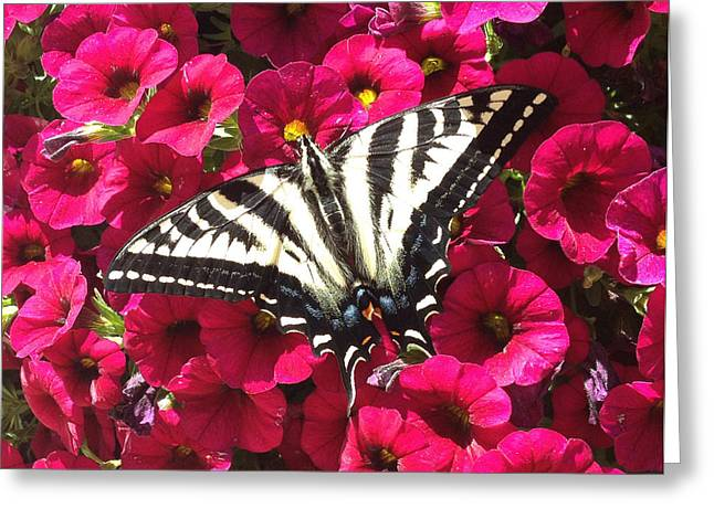 Swallowtail Butterfly Full Span On Fuchsia Flowers Greeting Card by Deprise Brescia