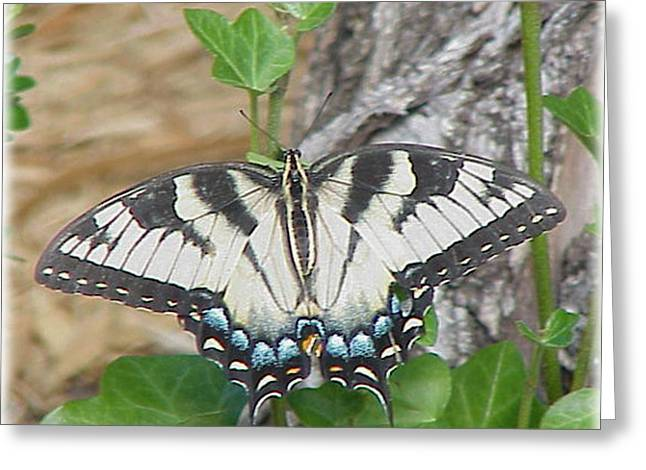 Swallowtail Butterfly Greeting Card by Hollye Knox