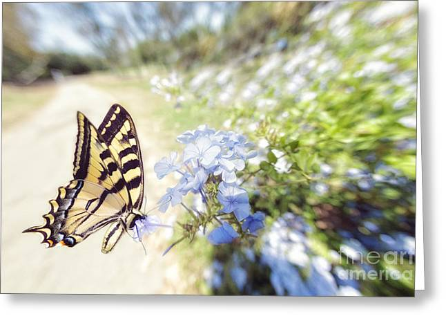 Swallowtail Butterfly In Spring Greeting Card