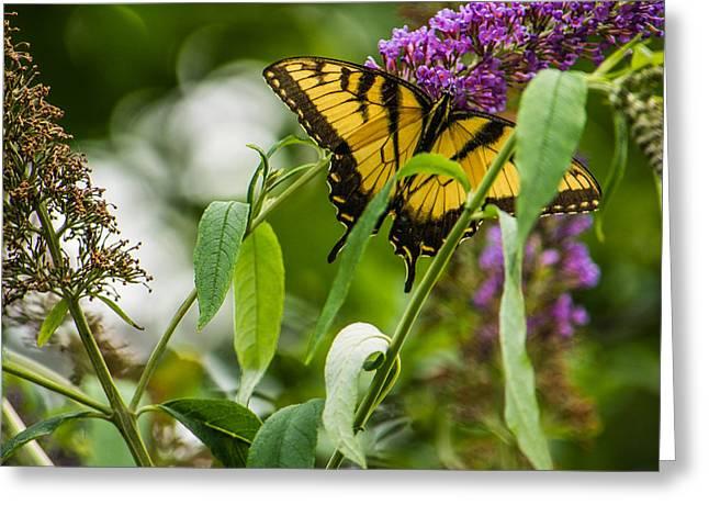Swallowtail Butterfly Greeting Card by Jon Woodhams