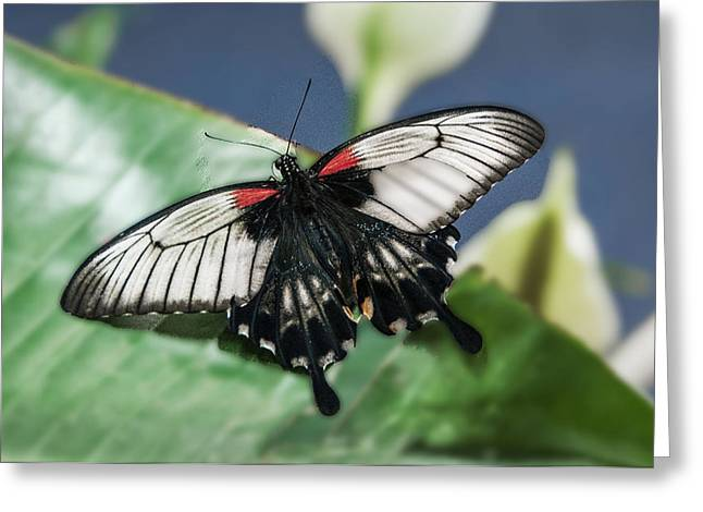 Greeting Card featuring the digital art Swallowtail Butterfly by Mae Wertz