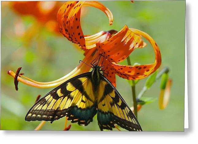 Swallowtail Butterfly3 Greeting Card