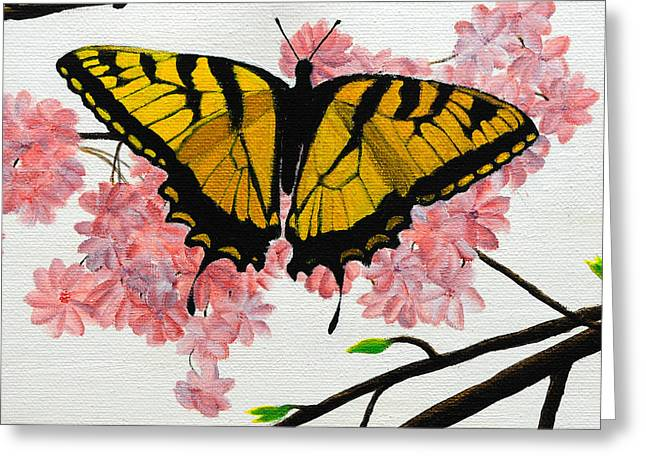 Swallowtail In Cherry Blossoms Greeting Card by Jane Axman
