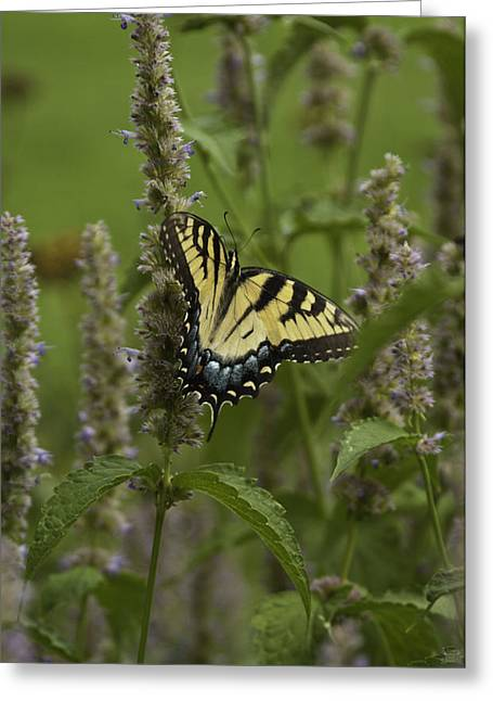 Swallowtail In Flower Field Greeting Card