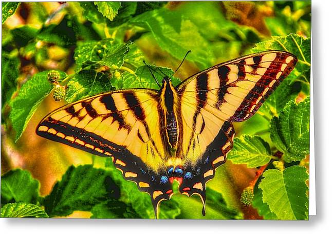 Swallowtail Greeting Card by Larry Bodinson