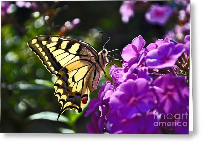 Swallowtail On A Flower Greeting Card