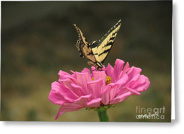 Swallowtail On A Zinnia Greeting Card by Debby Pueschel