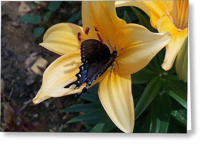 Greeting Card featuring the photograph Swallowtail On Asiatic Lily by Kathryn Meyer
